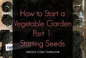 How to Start a Vegetable Garden Part 1: Starting Seeds